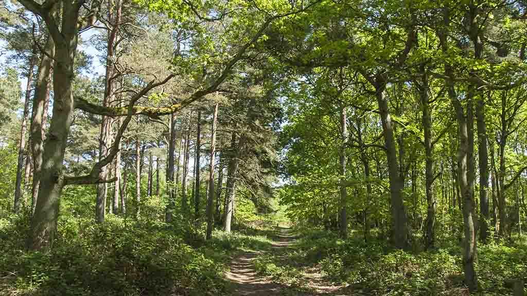 egebjerggård storskov